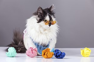 cat and crumpled ideas