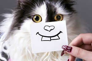 cat and smile