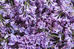 Bouquet of lilac flowers, closeup.