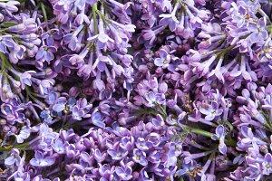 Bouquet of lilac flowers, closeup.