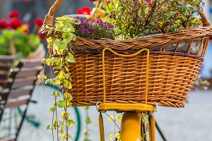 Flowers on a bicycle