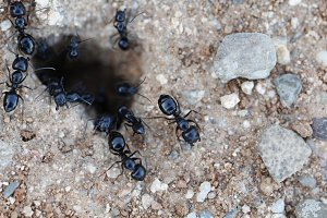 Ants around the anthill