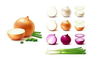 Vector Realistic Onion Set