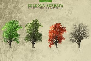 Zelkova Serrata Trees