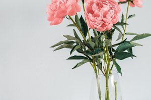 peony Living Coral bouquet in vase