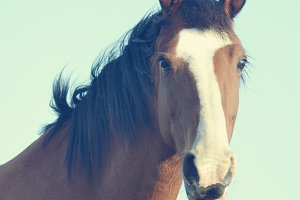Handsome Brown Horse