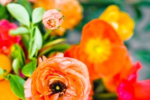 Bright Bold Flowers in Orange & Pink