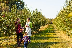Young mother picking apples for her