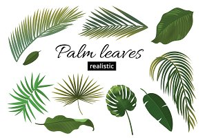 Tropical Plant Leaf Set. Realistic
