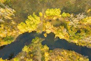 yellow autumn season nature river  f