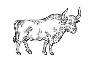 Bull rural farm animal engraving