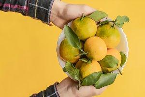 hands holding fresh mandarin fruits