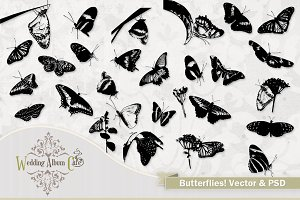 Butterflies! Vector Butterfly Art