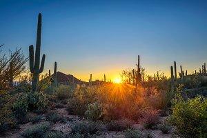 Sunset in Saguaro National Park in