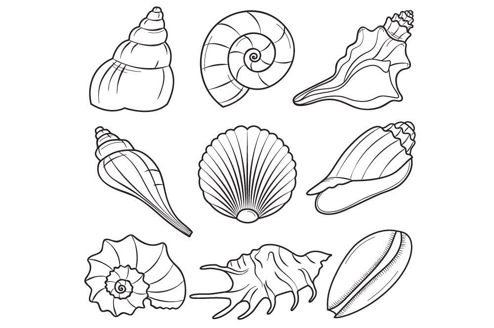 Seashells Illustrations Creative Market