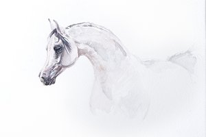 watercolor painting of arabian horse