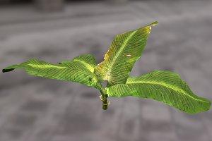 Large_Leaf_Plant