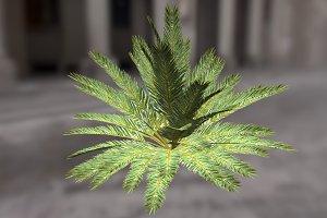 Palm_Bush