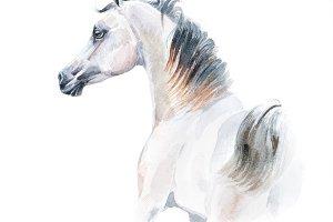 watercolor painting of arabian horse