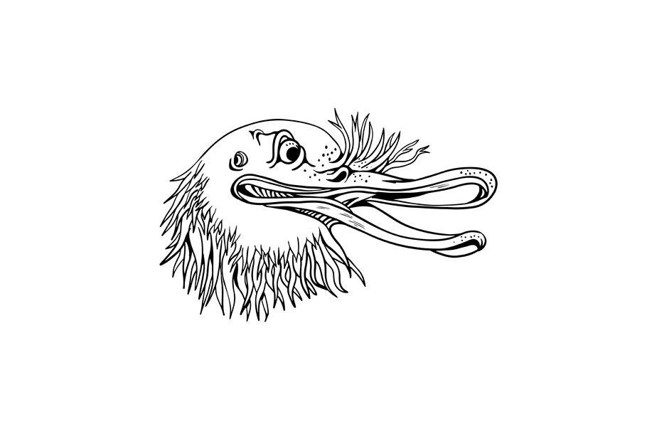 Angry Kiwi Bird Head Cartoon Black A Illustrations Creative Market