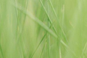 grass photo 3