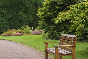 Wooden bench in a beautiful park