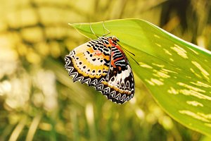 Butterfly in Suspended Animation