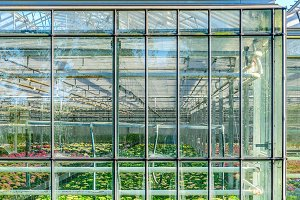 Greenhouse exterior in Holland
