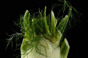 Fennel Bulb on Black