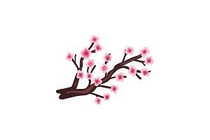 Sakura cherry branch with blooming