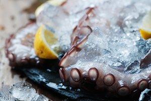Uncooked octopus