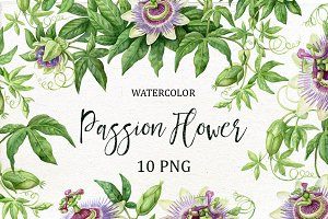 Watercolor Passion Flower.