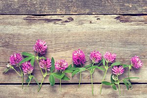 Clover flowers on wooden plank