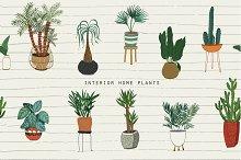 Interior Home Plants