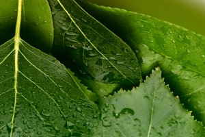 Green leaf with drops background