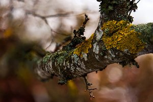 Branch covered in moss lichen close