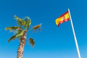 Spanish flag and palm tree
