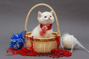 White British kitten in a basket