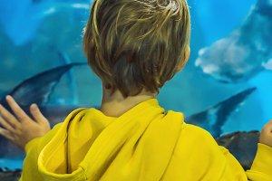 Little boy, kid watching the shoal