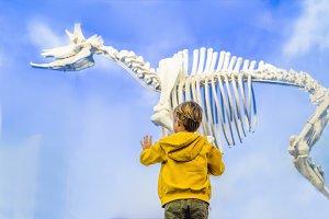 The Boy watching dinosaur skeleton
