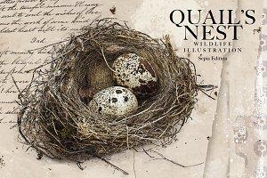 Quail's Nest - Sepia Edition