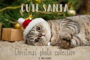 Christmas cat dressed as Santa