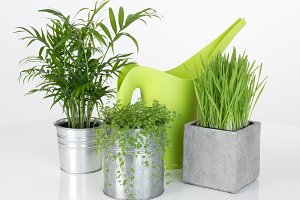 Beautiful plants and watering can