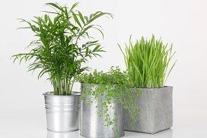 Beautiful plants in metal pots