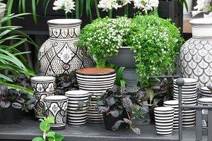 Flowers, plants and ceramics