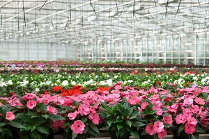 Greenhouse with variety of flowers