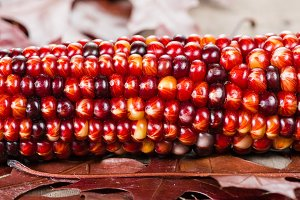 Ear of colorful corn