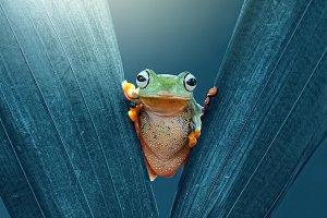 Frog Between the Leaves