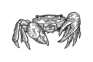 Crab animal engraving vector