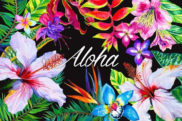 aloha tropical flowers kit illustrations creative market